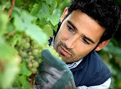 Activities in Barcelona - Teambuilding in Barcelona - Grape Harvest